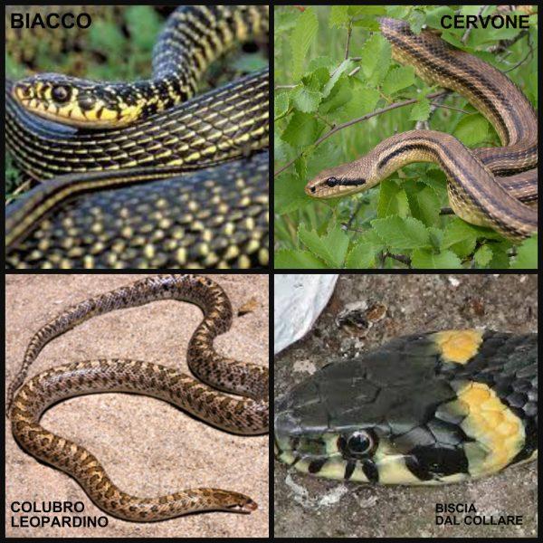 etna snakes 2