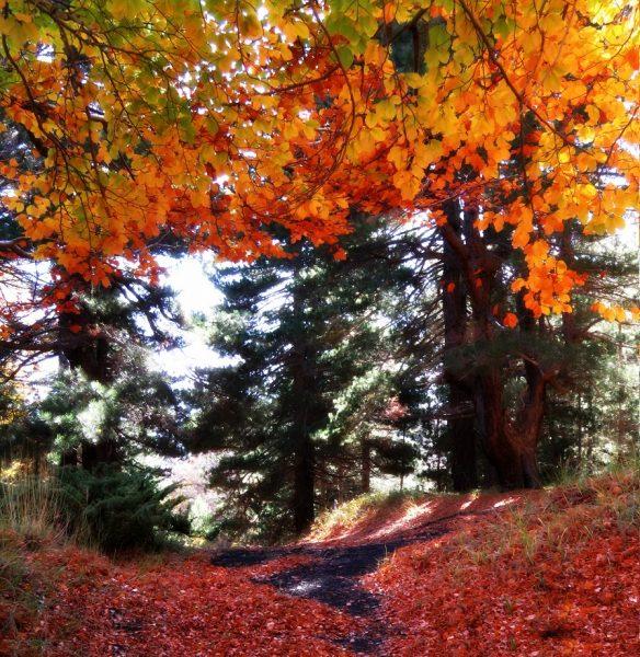 red leaves etna02